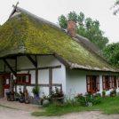 dornenhaus02_1